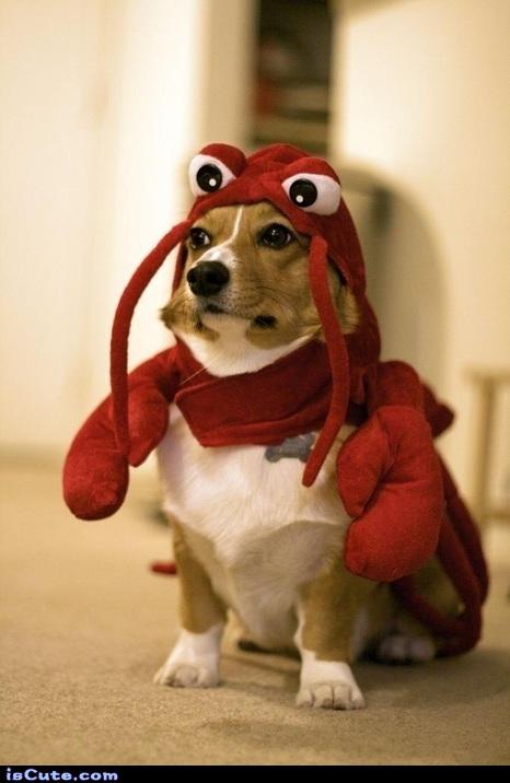Lobster Pup @ isCute.com