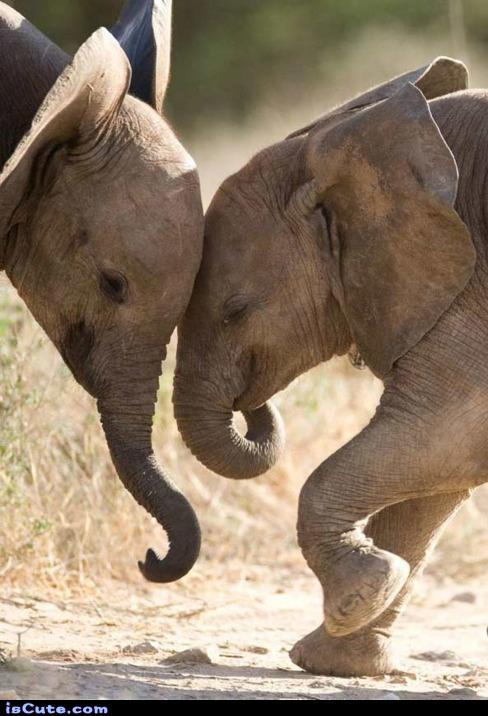 Elephant Baby Love @ isCute.com