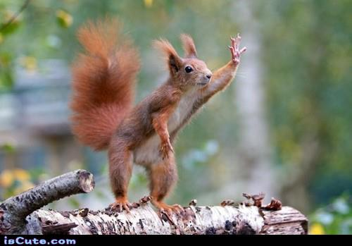 Waving Squirrel @ isCute.com