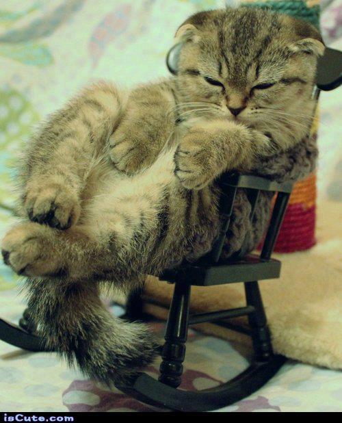 Cool Rockin Cat Iscute Com
