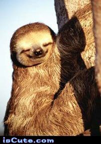 Happy Sloth Iscute Com