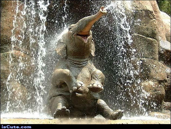 Elephant Shower IsCute