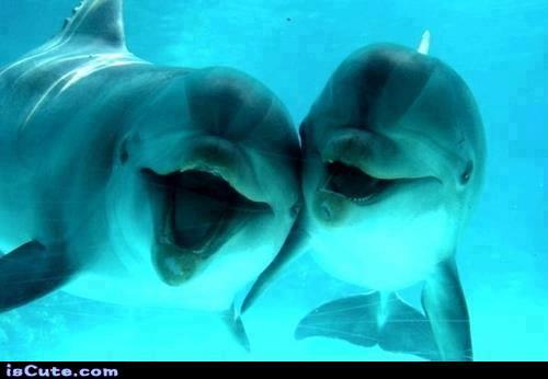 Happy Dolphin (@happydolphin4u)   Twitter